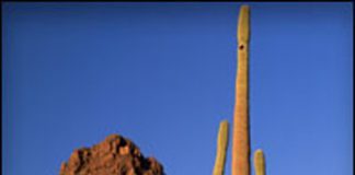 spire2011_tuscon