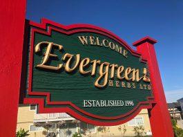 mayfair signs evergreen herbs hdu